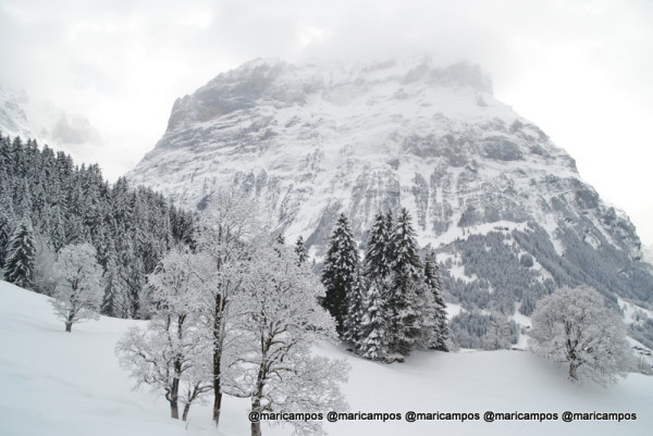 Interlaken Grindelwald First
